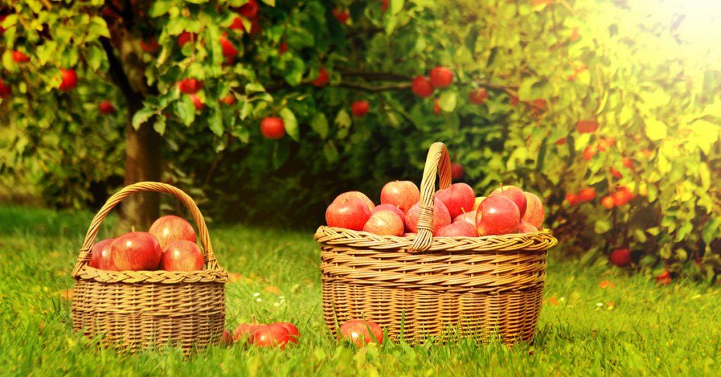 Вот что стоит сделать на Яблочный Спас 19 августа, чтобы весь год провести в изобилии!