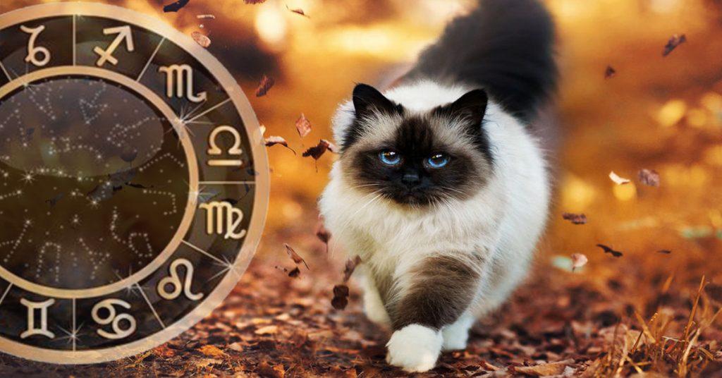 6 знаков зодиака, которым повезёт в сфере финансов с 25 сентября по 1 октября 2017 года