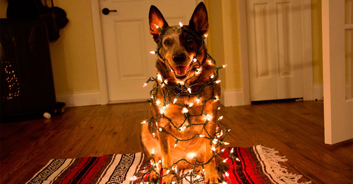 Понять и простить картинка собака с елкой